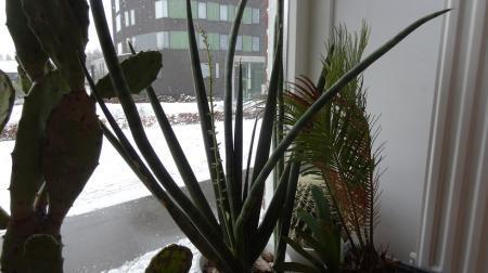vetplant in Oman
