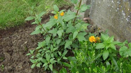 Geel plantje