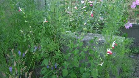 enkele onbekende plantjes