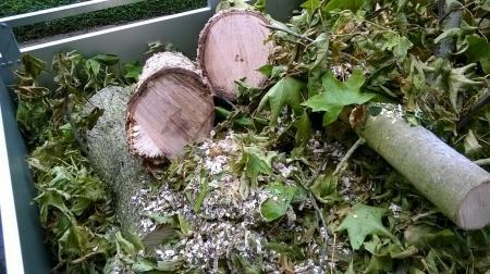Amberboom verwelkt; witte substantie onder op stam
