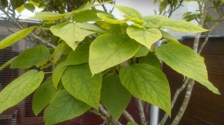Hoe kan ik mijn boom genezen