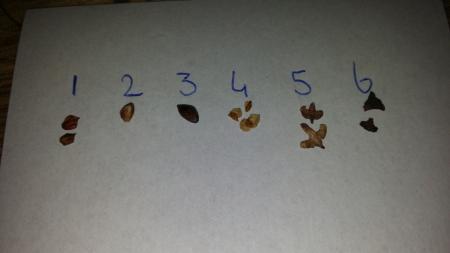 Bonsai mix, van welke bomen zijn de zaadjes?