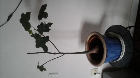 Penwortel verwijderen