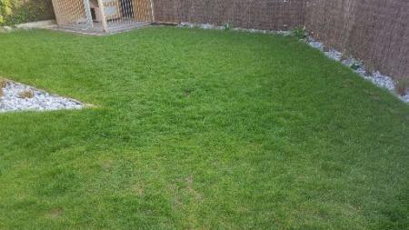 Gras plekken
