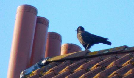 vraagje aan Birdwatcher (of een andere vogelkrak)