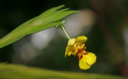 Wat bloeiende orchideeen