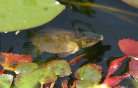 onbekende vis