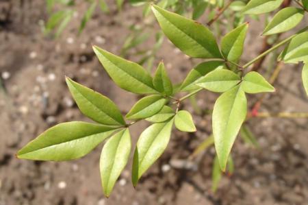plant van oma