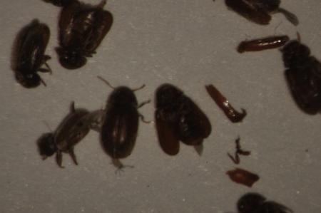 Insecten in huis