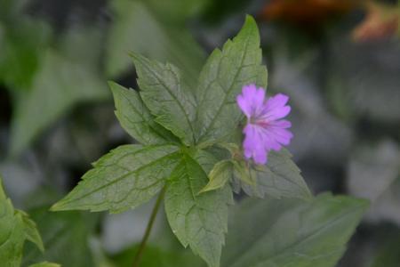 Bosplant - onbekend