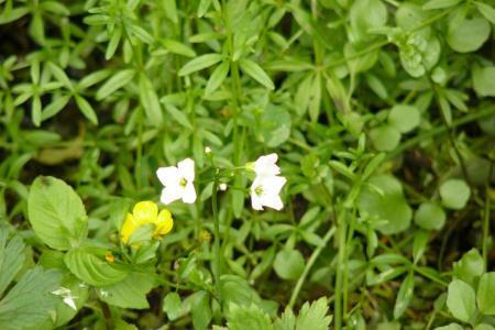 Duinplanten 1