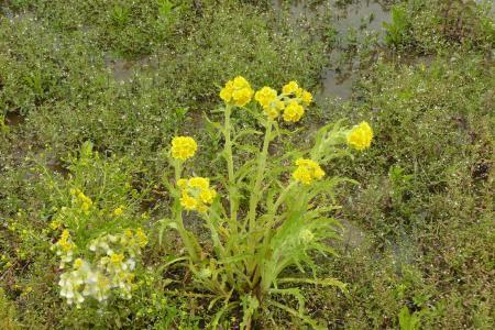 Mij onbekende planten