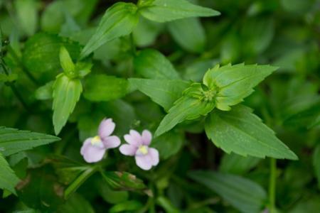 Kent iemand dit plantje??