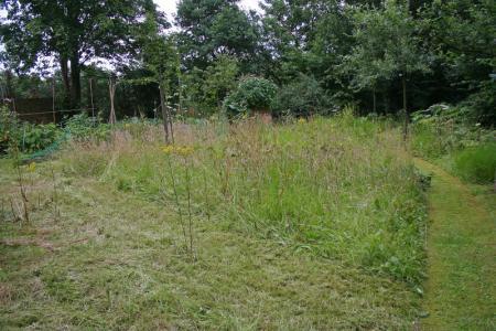 gras vol onkruid vertikuteren en bijzaaien?