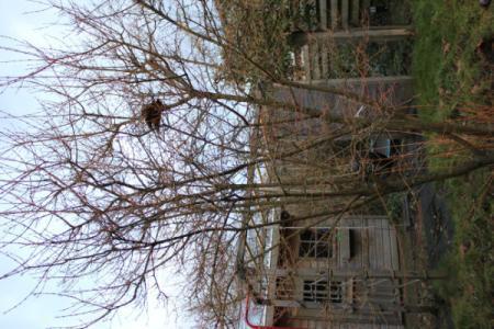 Nieuw huis , nieuwe tuin, welke boom is dit? (1)