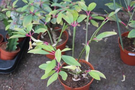 Enige kamerplanten