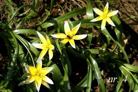 5 planten identificeren
