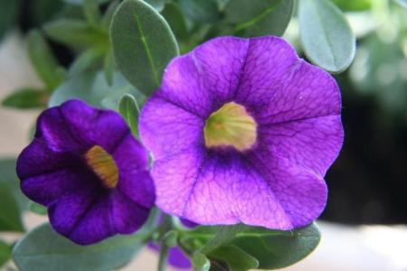 Welke bloemen zijn dit? Deel 4