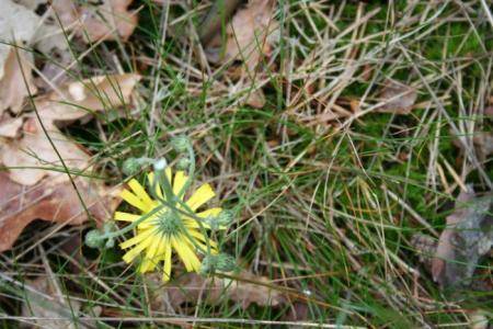 Welke bloemen zijn dit? Deel 5