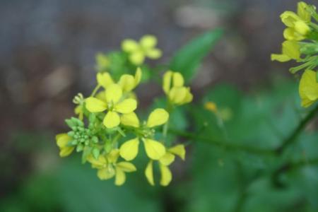 Welke bloemen zijn dit? Deel 6