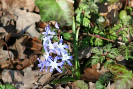 Welke bloemen zijn dit? Deel 9 Het laatste deel.