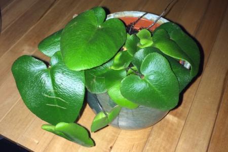 Wat voor een plantje is dit?