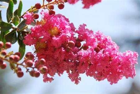 Diverse bloemen