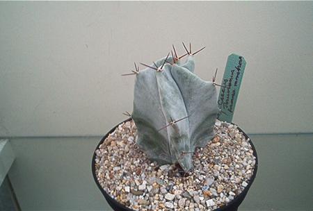 En dan nu een keer een cactus identificatie