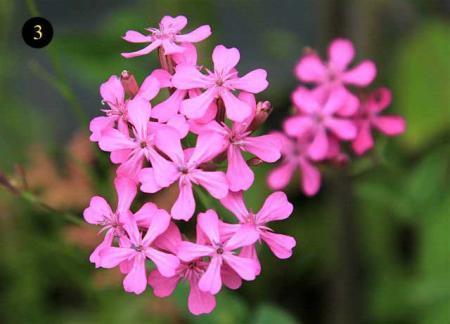 Namen van wilde bloemen uit zaadmengsel