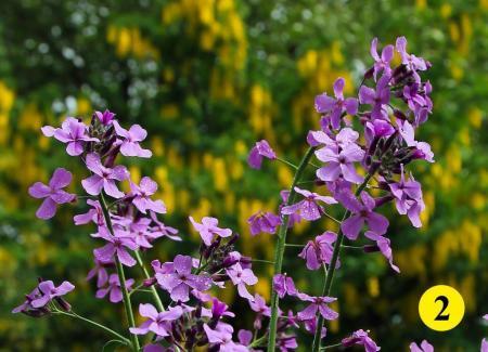 Welke wilde bloem kan dit zijn.