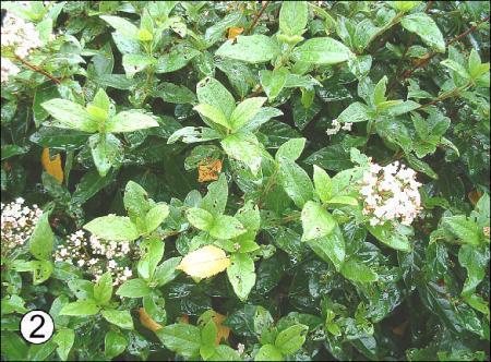wie kent deze planten?