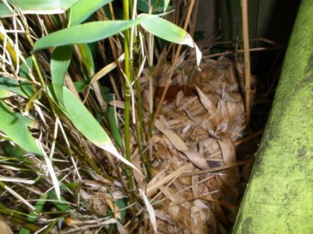 Wat voor nest is hier gemaakt?