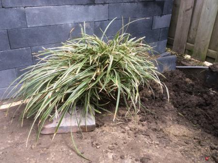 Welke planten / struiken zijn dit...