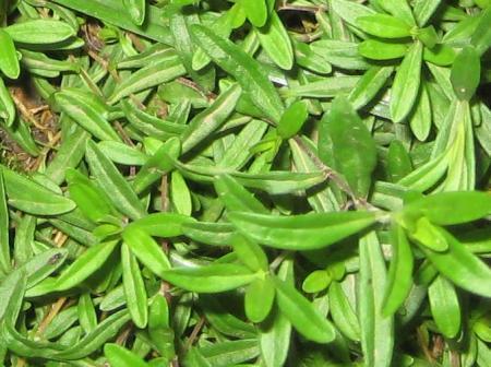 welke plantjes zijn dit ?