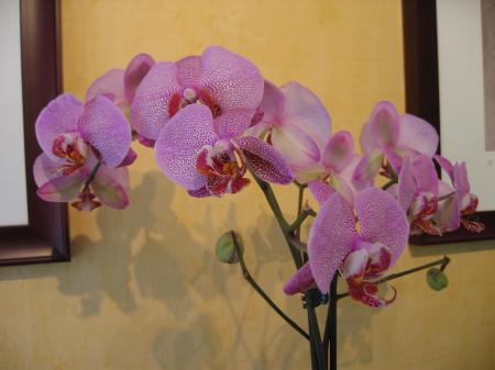 uitvallende bloemen orchidee