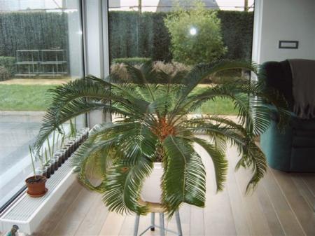 Naam plant???