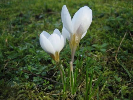 welke bloem