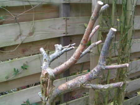 Salix nog niet uitgelopen