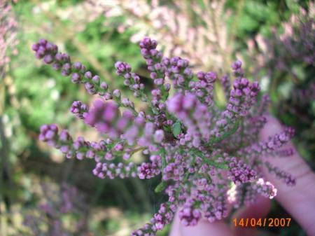 Nieuwe tuin, veel onbekende planten