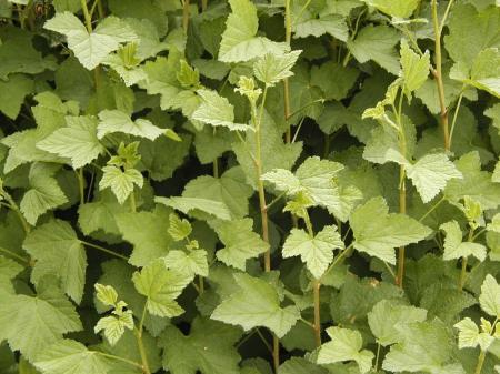 onbekende struiken/planten-1