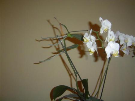 zag vandaag : nieuwe planten aan de bloemstengel?