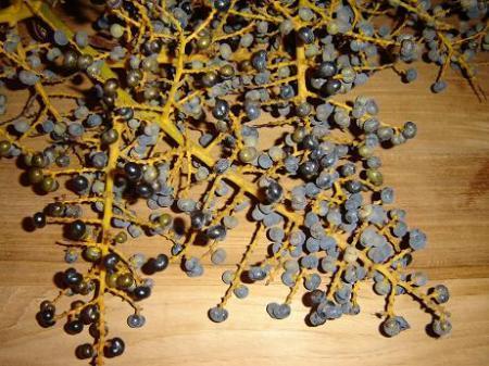 Bloemen trachycarpus...
