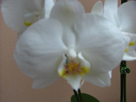 nieuwe orchideeen