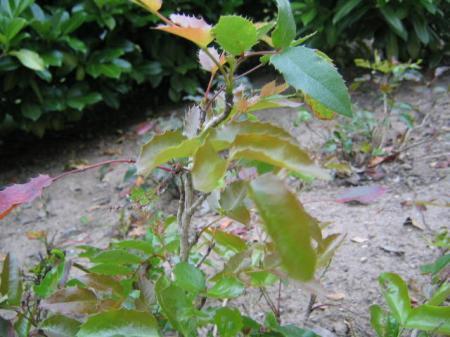 Identificeren planten en bomen