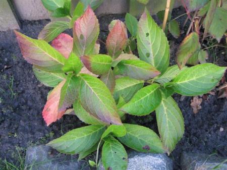wie kan me vertellen welke planten dit zijn?