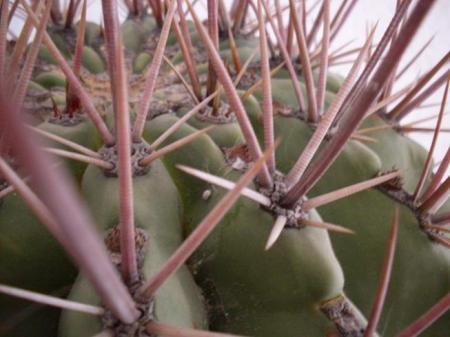 Wie kan mij helpen met mijn cactus?
