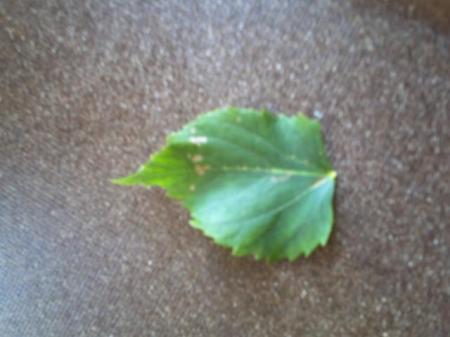 weet iemand wat voor boom is dit??