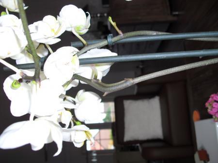 nieuwe bloemtak!!