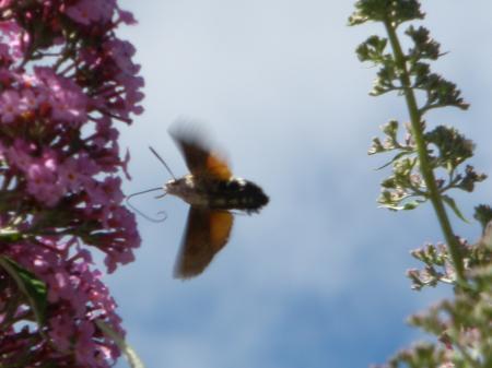 Warmer/nieuwe vlinders in noorden van het land?