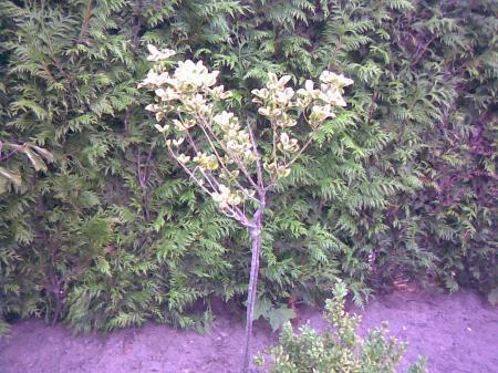 Wat zijn dit voor heesters / planten? (in 1 topic)